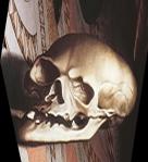 Anamorphic skull